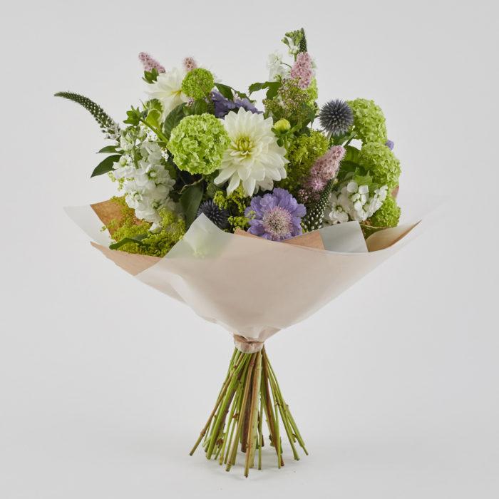 Floom Botanique Dahlia Scabious 1