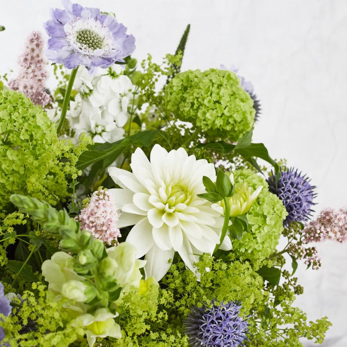 Floom Botanique Dahlia Scabious 4
