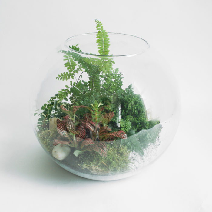 Floom Design By Nature Terrarium Fern 1