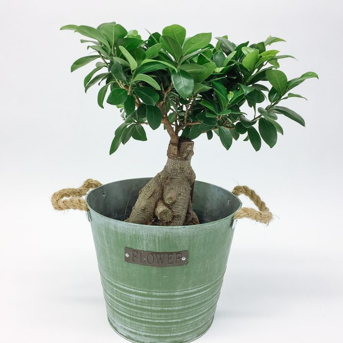 Floom Dw Floral Design Tree Bucket 1