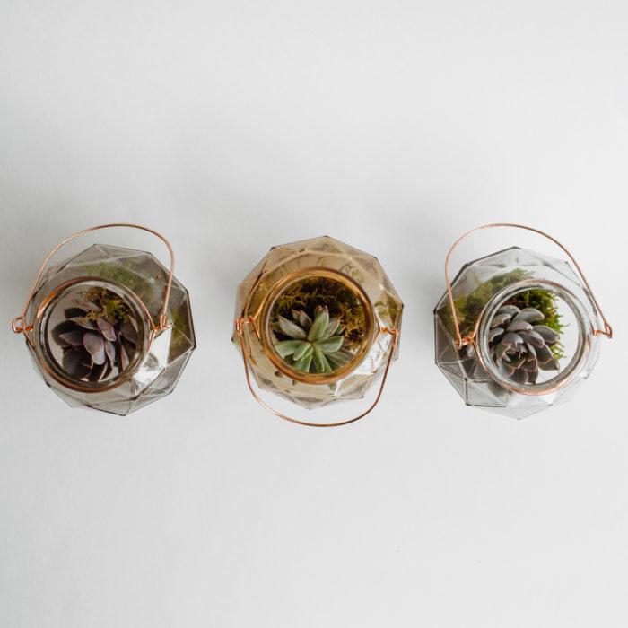 Floom Herbert Isles Succulent Trio 2