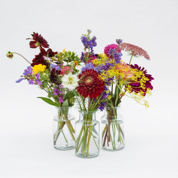 Floom Serendipity Botanist Jar Trio 1