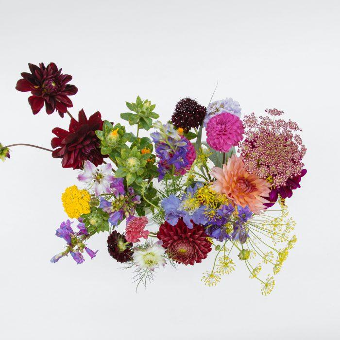 Floom Serendipity Botanist Jar Trio 2