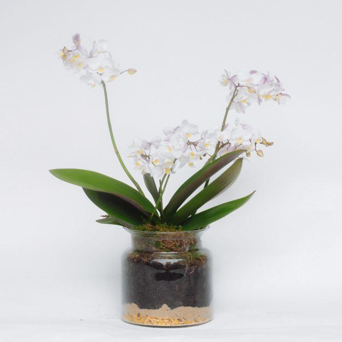 Floom Serendipity Botanist Orchid Jar 1