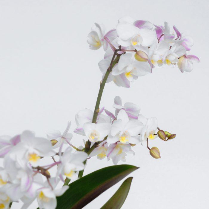 Floom Serendipity Botanist Orchid Jar 2
