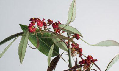 1 Floom Magazine Flower Of The Week Euphorbia 1