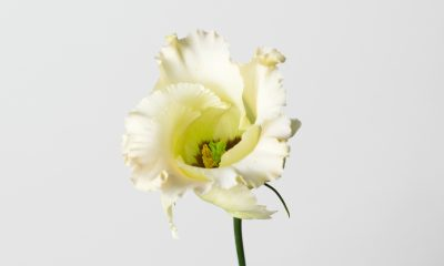 1 Floom Magazine Flower Of The Week Lisianthus 1