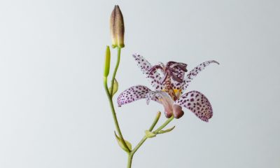 1 Floom Magazine Flower Of The Week Toad Lily 1