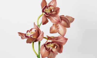 Floom Fotw Cymbidium Ls 1