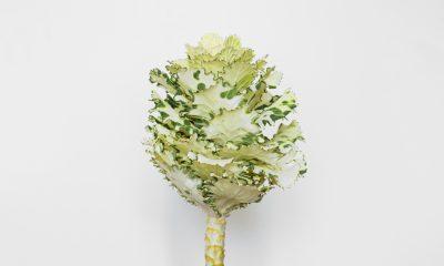 Floom Fotw Brassica Ls