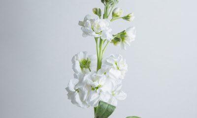 Floom Flower Of The Week Stock