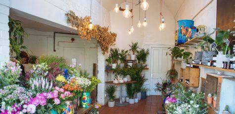 Floom Larkspur Lavender Studio 2