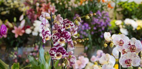 Floom Sevenoaks Florist Studio 4