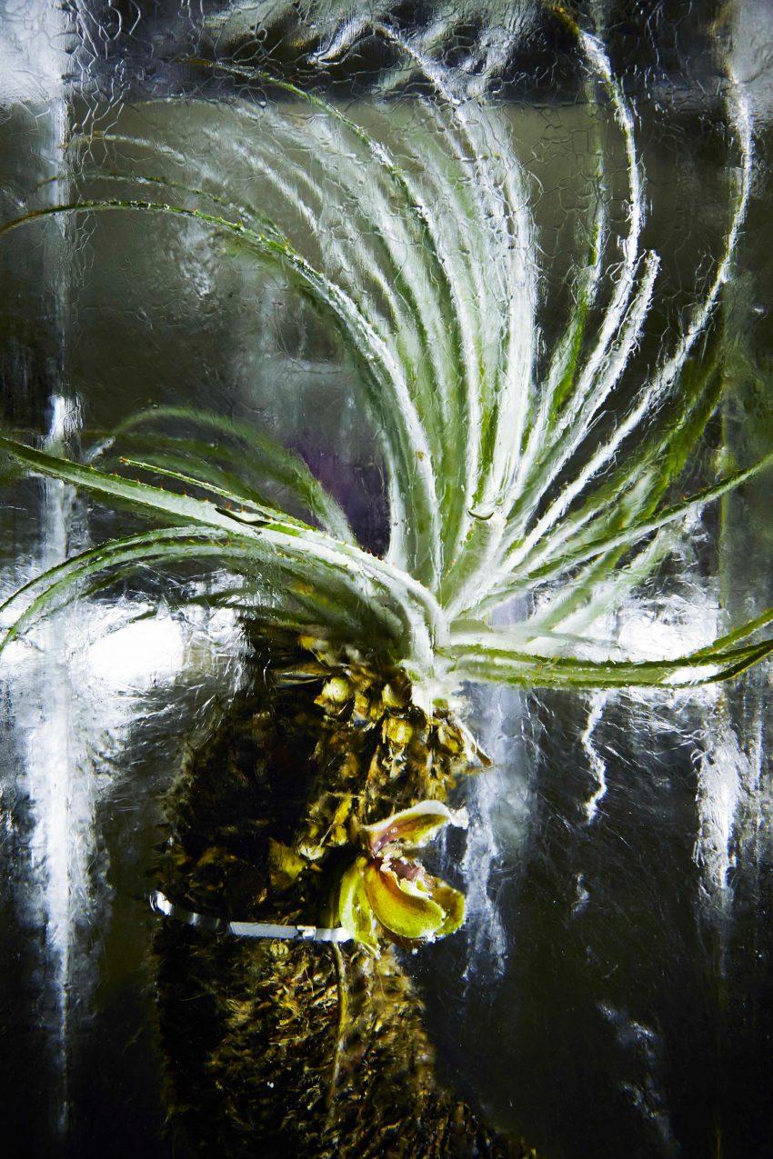 1 Floom Magazine Azuma Makoto Iced Flowers Art 1