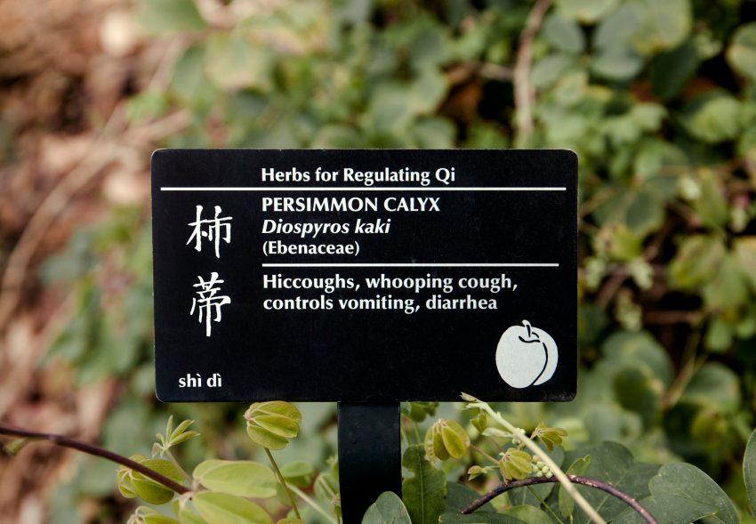 1 Floom Magazine Berkeley Botanical Gardens Cchavar 5
