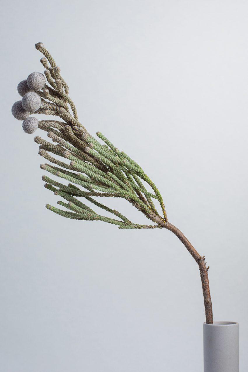 1 Floom Magazine Flower Of The Week Brunia 2