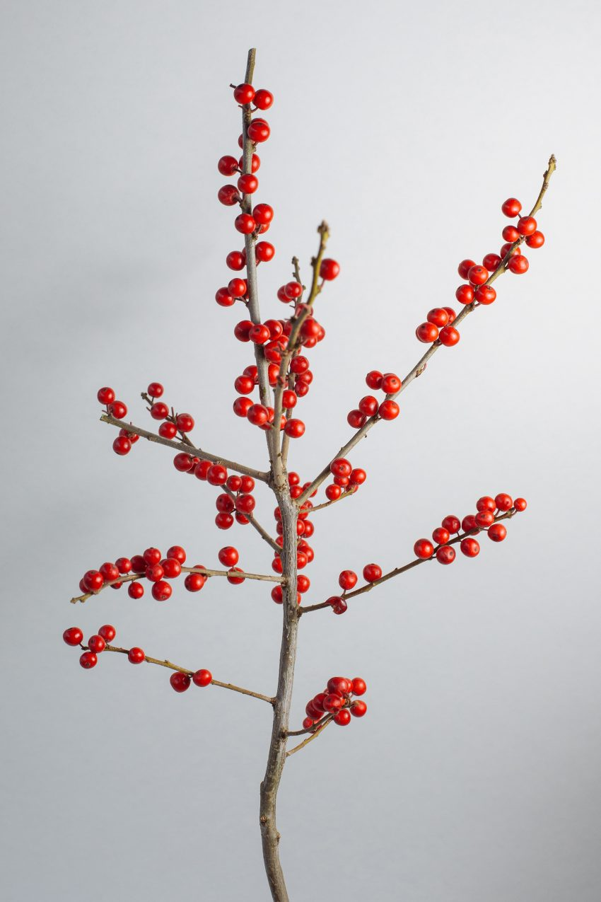 1 Floom Magazine Flower Of The Week Ilex 2