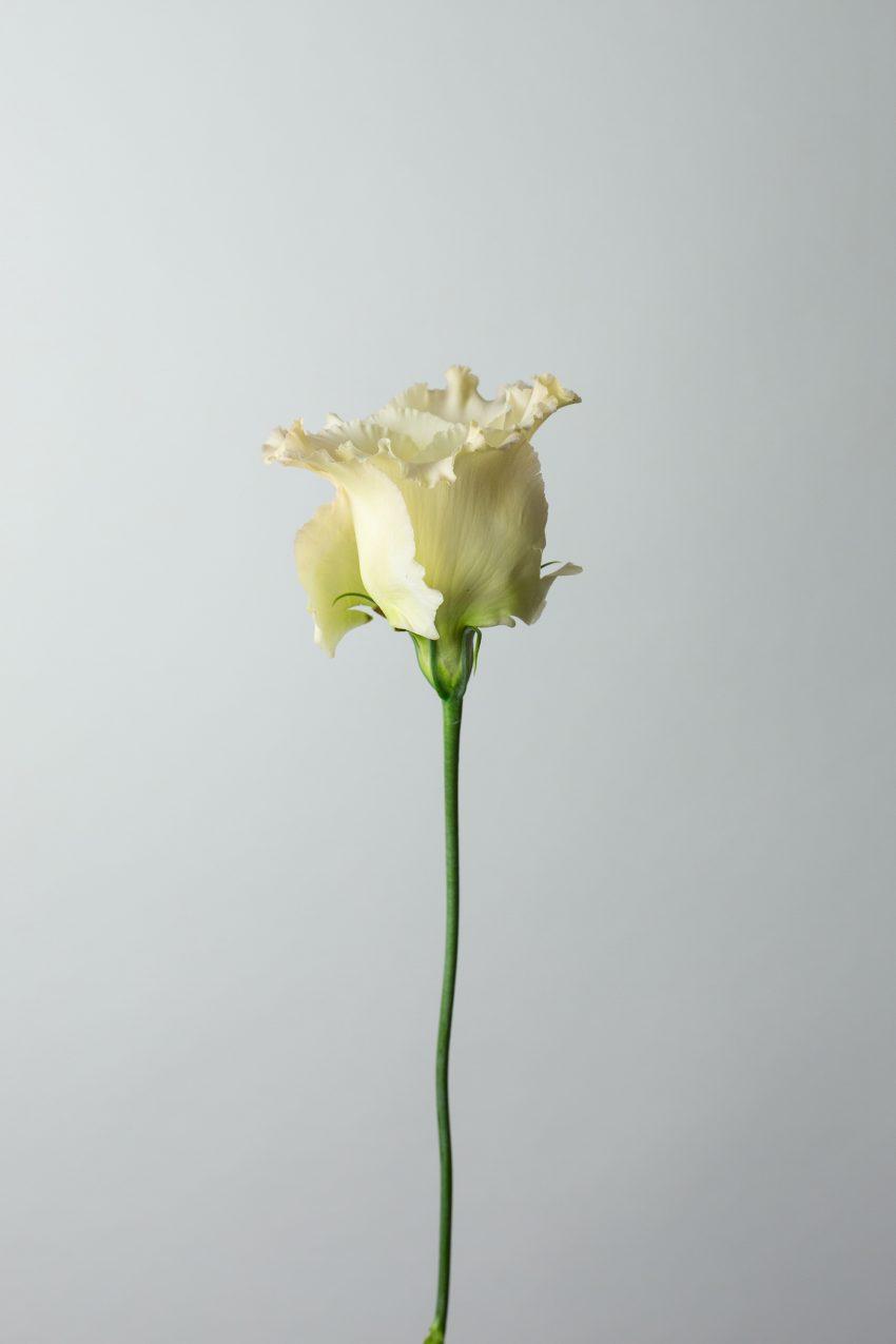 1 Floom Magazine Flower Of The Week Lisianthus 2