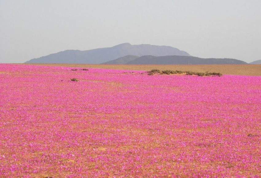 1 Floom Magazine Flowers In Baren Places Robert Greco The Flowering Desert 1