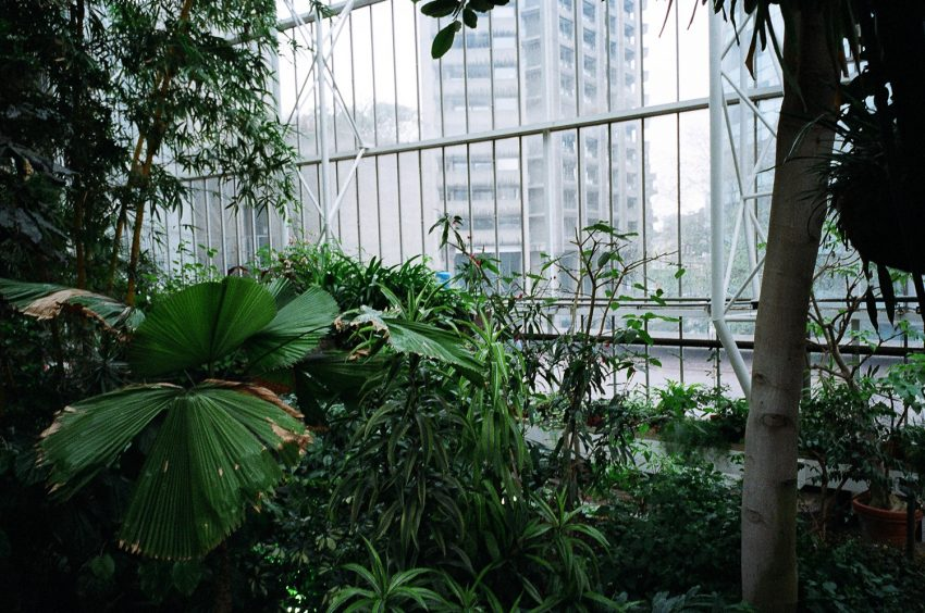 1 Floom Magazine Green Spaces Barbican Conservatory Blinkypalermo 1