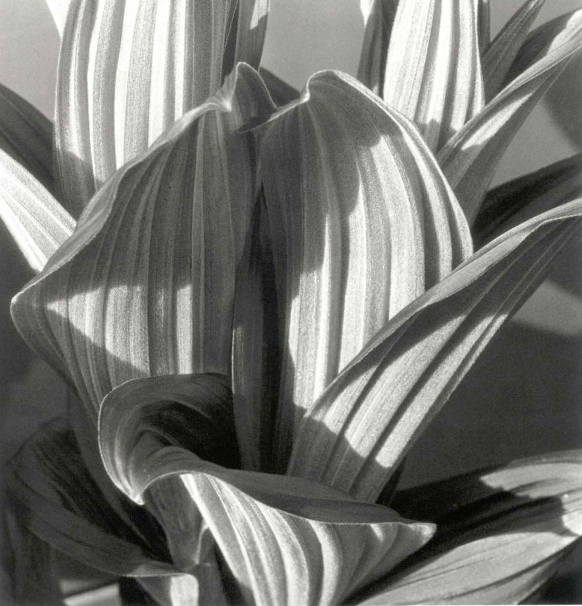 1 Floom Magazine Imogen Cunningham Cswashington 1