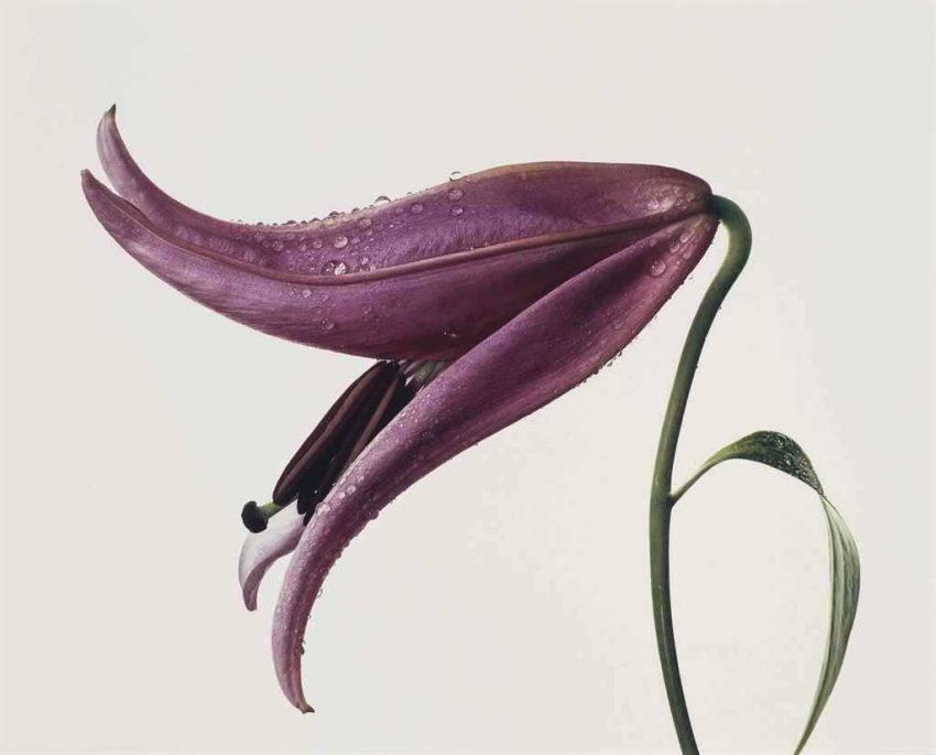 1 Floom Magazine Irving Penn Flower 2