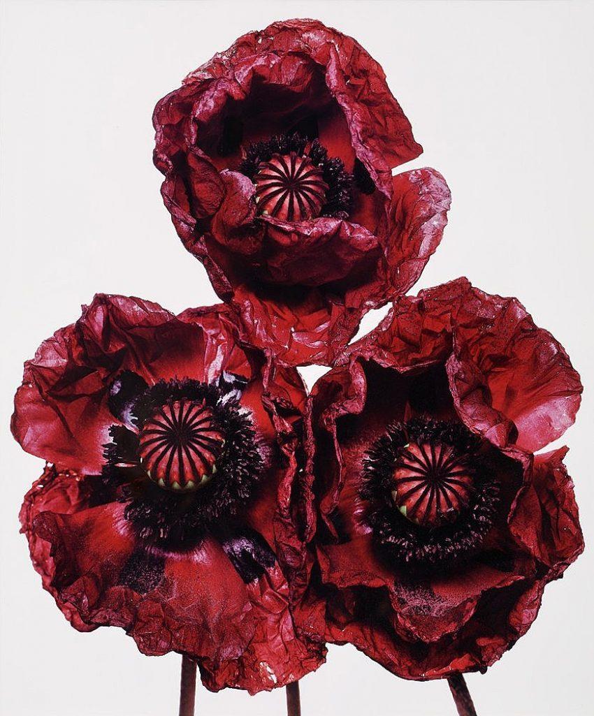 1 Floom Magazine Irving Penn Three Poppies 1