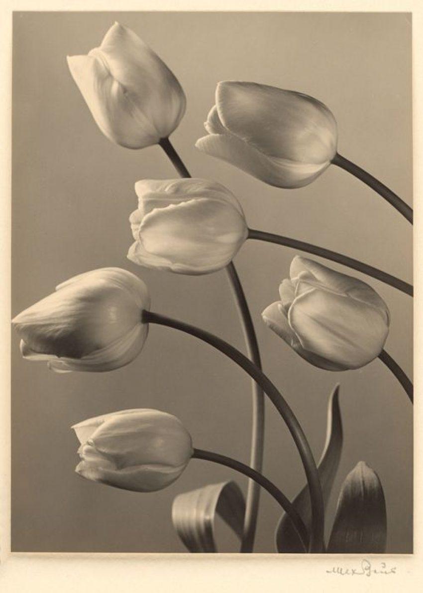 1 Floom Magazine Max Baur Photography Pintrest 2