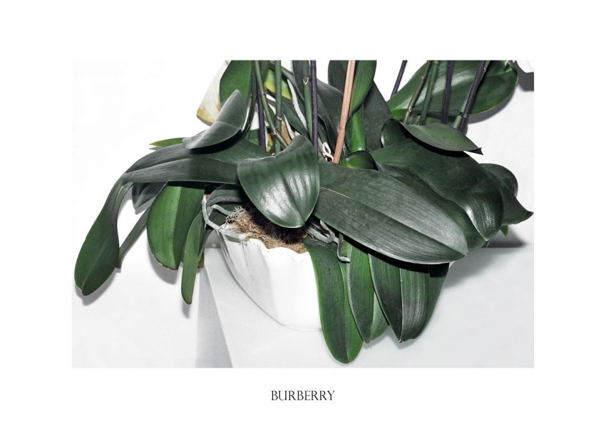 1 Floom Polly Brown Plants Burberry 1