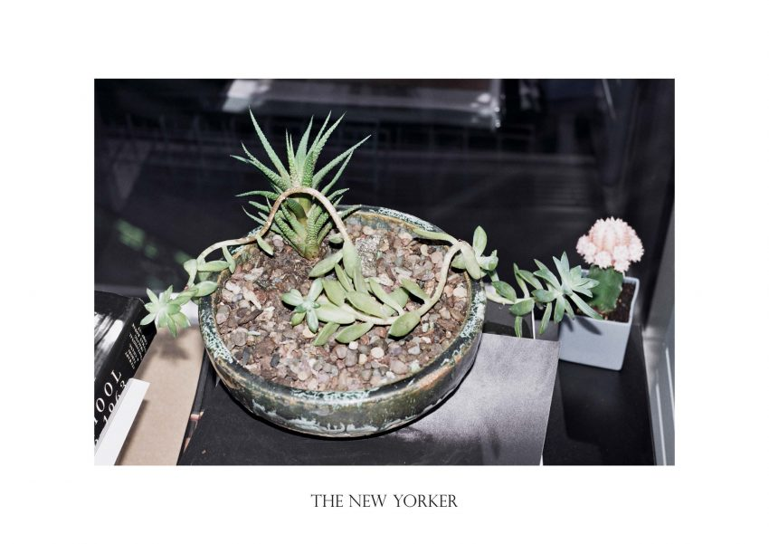 1 Floom Polly Brown Plants Newyorker 1