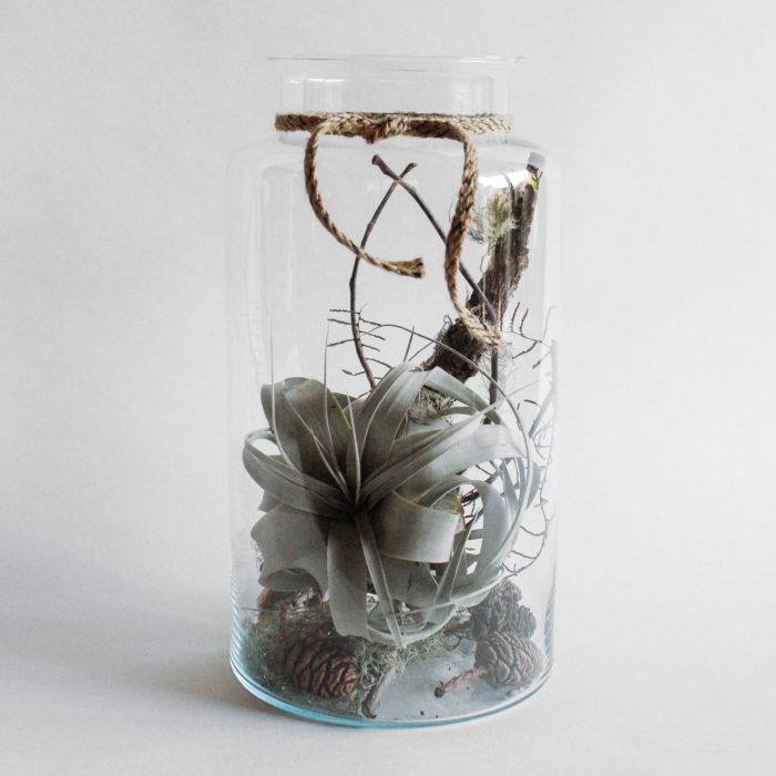 Floom Miss Moles Flower Emporium Airplant Terrarium Tillandsia 1