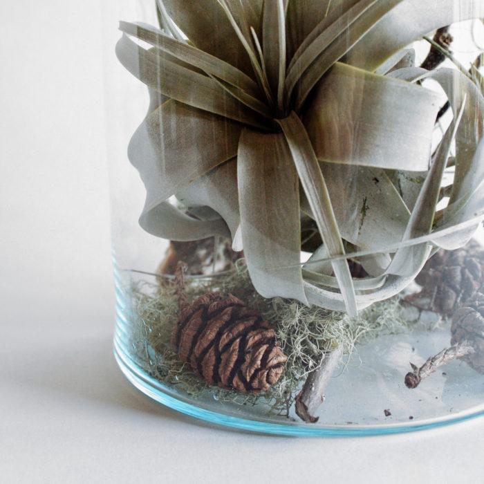 Floom Miss Moles Flower Emporium Airplant Terrarium Tillandsia 2