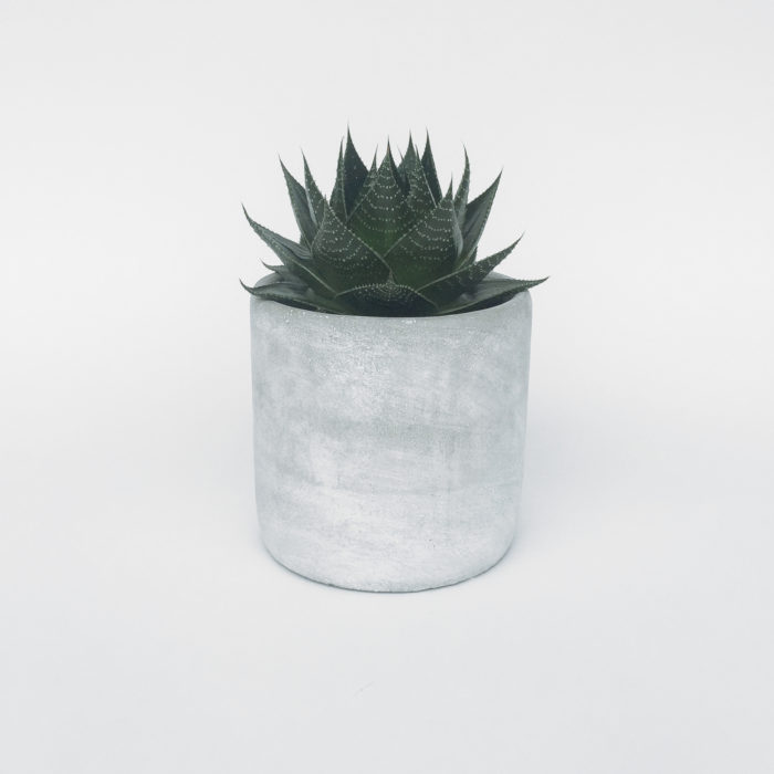 Floom Ruby Bloom Aloe In Concrete 1