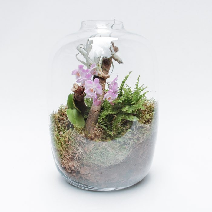 Floom Tame Pansy Orchid Bell Jar 1
