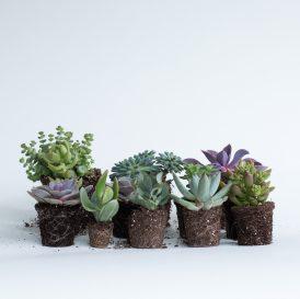 Floom The Fresh Flower Company Plants Succulent Selection 1
