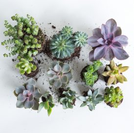 Floom The Fresh Flower Company Plants Succulent Selection 2