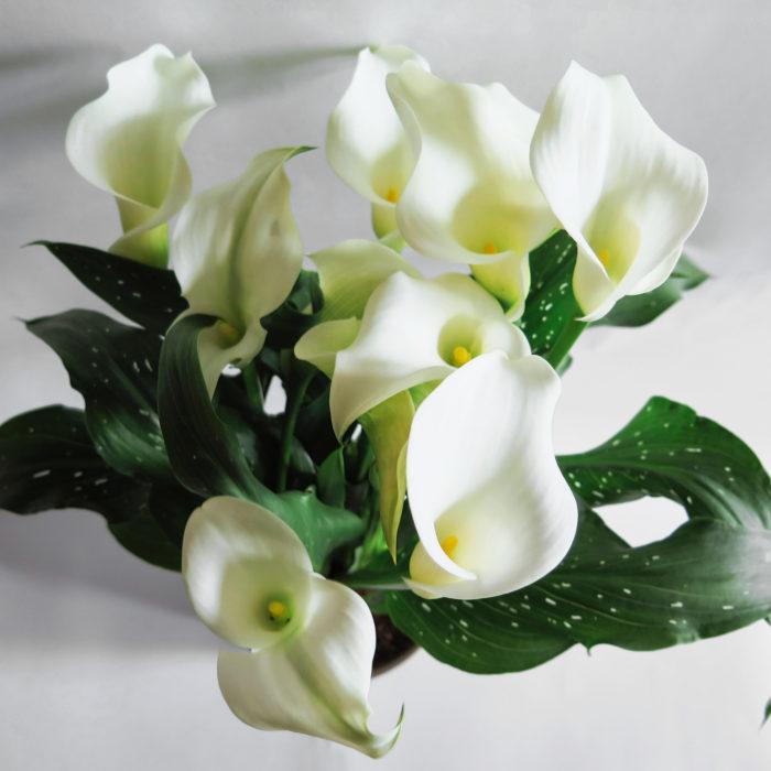 Floom Wild About Flowers Elegence 2