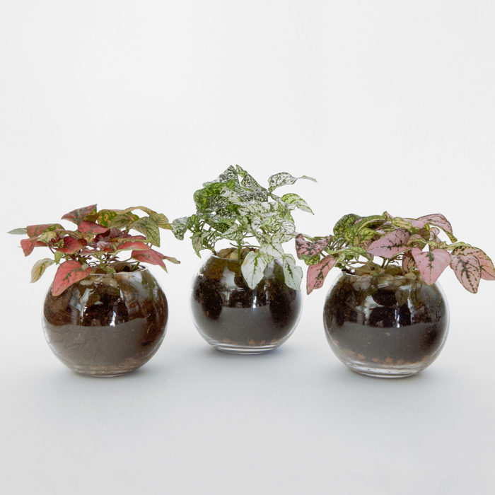 Floom Formosa Potted Trio 1