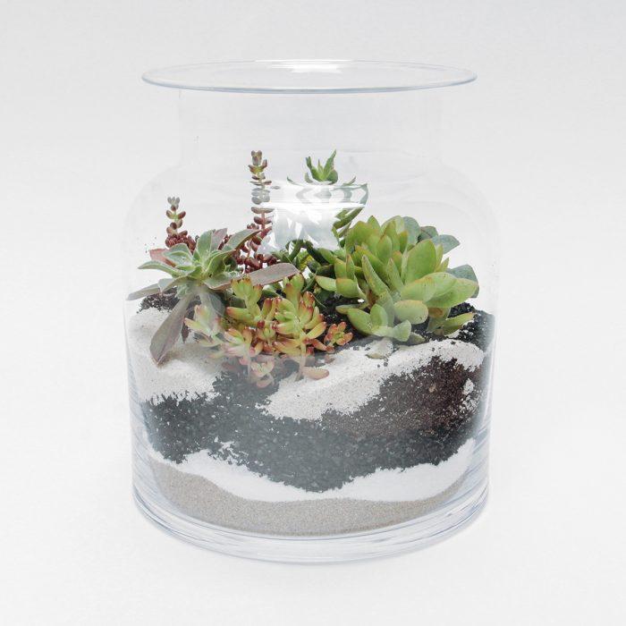 Floom Tame Pansy Terrarium Succulent Jar 1
