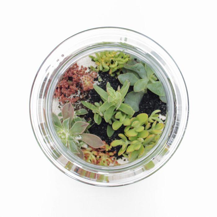 Floom Tame Pansy Terrarium Succulent Jar 2