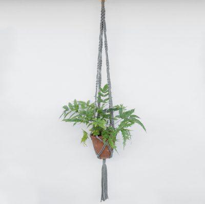 Floom Fresh Flower Company Hanger Fern 1