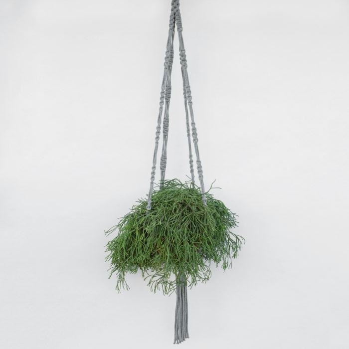 Floom Fresh Flower Company Hanger Rhipsalis 1