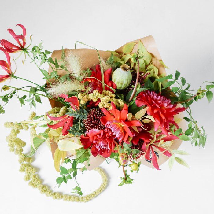Floom Southern Wild Dahlia Harlyn 2