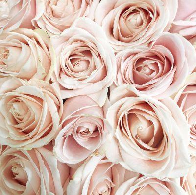 Floom Shilpa Reddy Hyde Park Rose Box 4