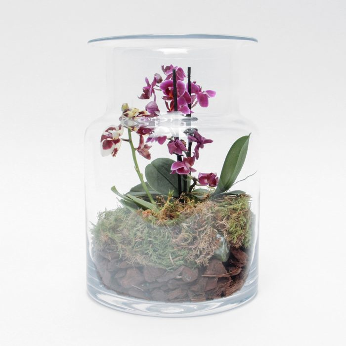 Floom Tame Pansy Orchid Jar 1