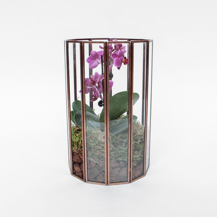 Floom Tame Pansy Orchid Cage2 1