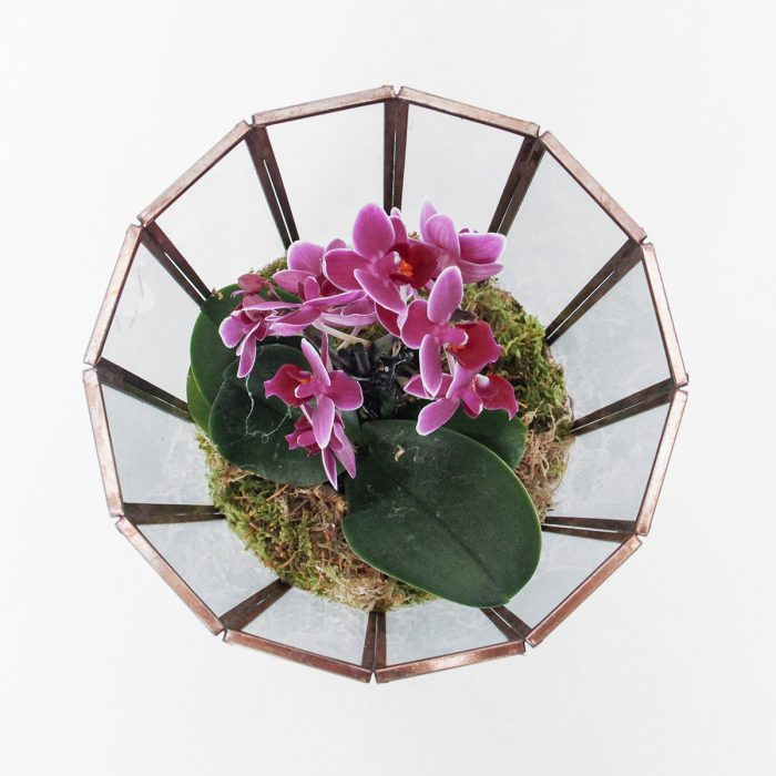 Floom Tame Pansy Orchid Cage2 2