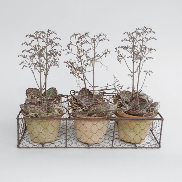 Floom Zita Elze Kalanchoe Planter 1