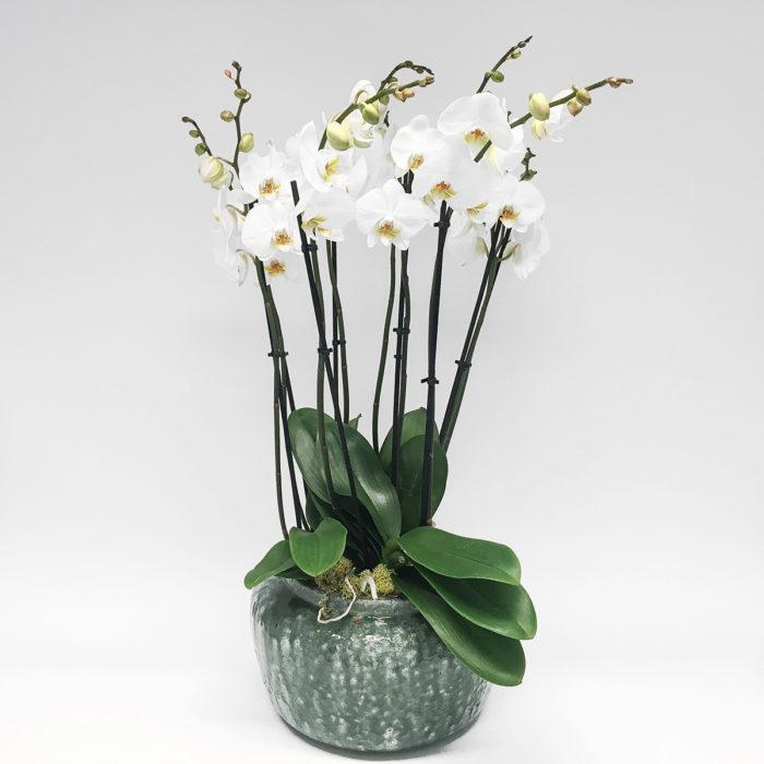 Floom Vendure Flowers Vanda Orchid 1