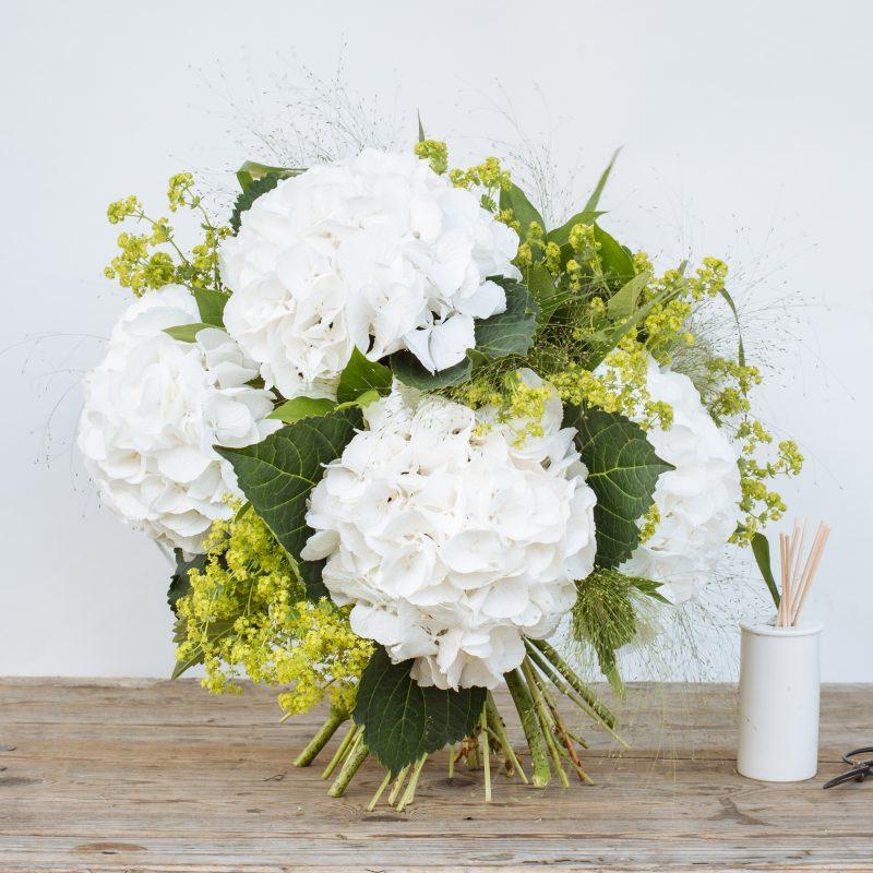 Massed White Hydrangeas